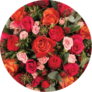 roses-colour-scheme